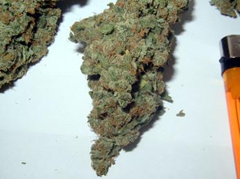 Smoking sweetgrass